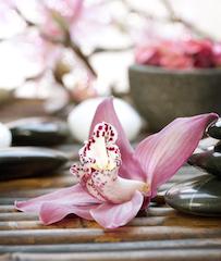 http://www.sarasotaadvancedskincare.com/wp-content/uploads/2014/04/small-flower-.jpg